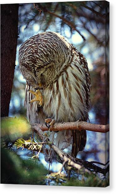 Rain Barrel Canvas Print - Rain Owl by Maria Angelica Maira