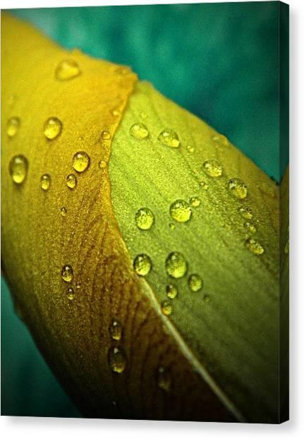 Rain Wrapped Canvas Print