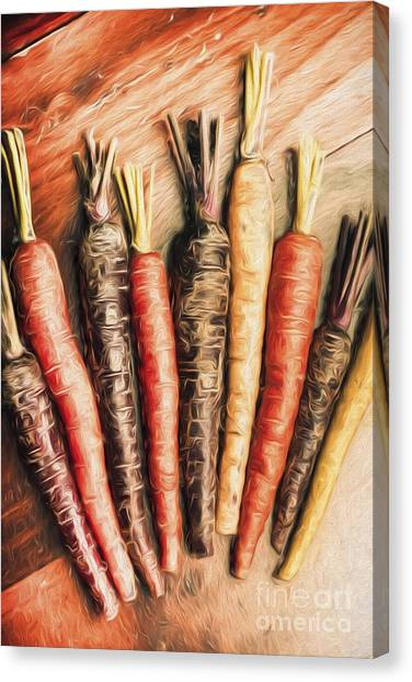 Ingredient Canvas Print - Rainbow Carrots. Vintage Cooking Illustration  by Jorgo Photography - Wall Art Gallery