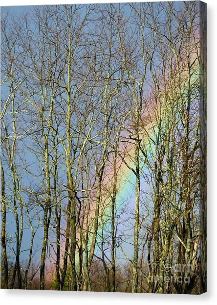 Canvas Print featuring the photograph Rainbow Hiding Behind The Trees by Kristen Fox