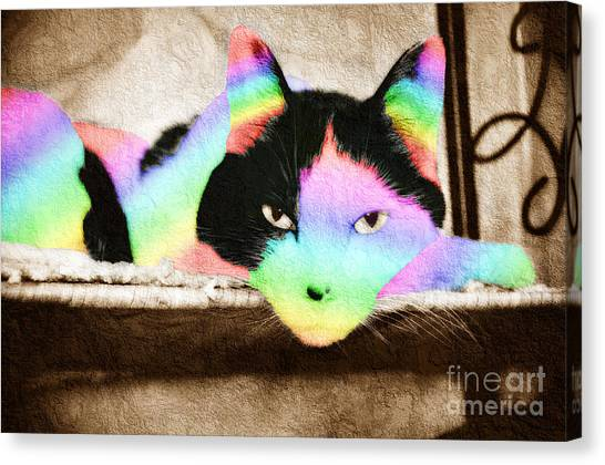 Andee Design Pet Canvas Print - Rainbow Kitty Abstract by Andee Design
