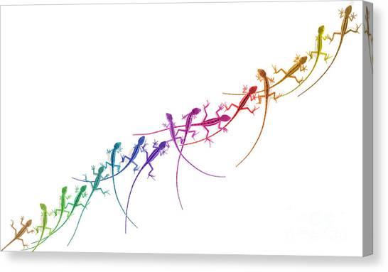Rainbow Lizard Canvas Print by Tim Gainey