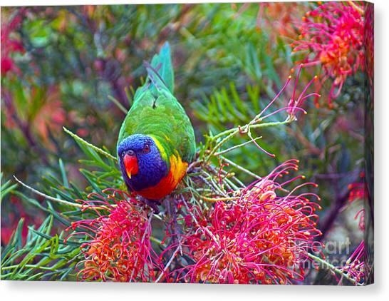 Rainbow Lorikeet I Canvas Print