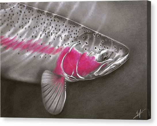 Fly Fishing Canvas Print - Rainbow Release by Nick Laferriere