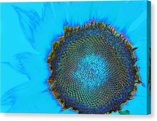 Rainbow Sunflower Canvas Print