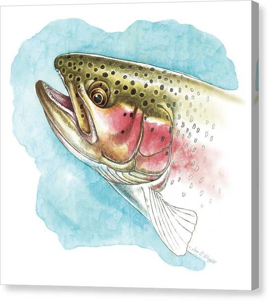 Trout Canvas Print - Rainbow Trout Study by JQ Licensing