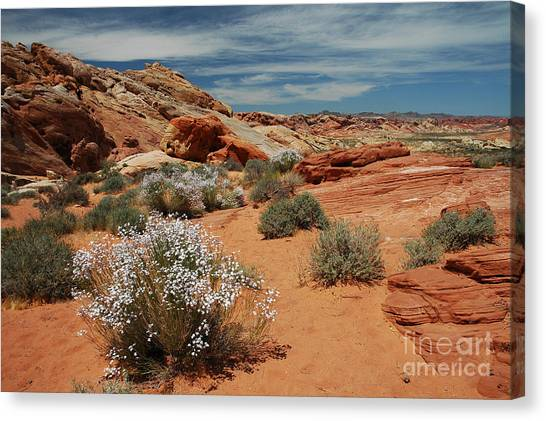 601p Rainbow Vista In The Valley Of Fire Canvas Print