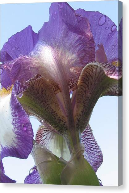 Raindrop Iris Canvas Print