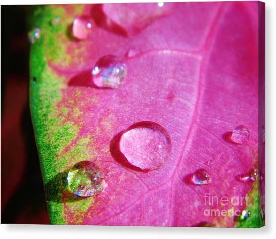 Raindrop On The Leaf Canvas Print