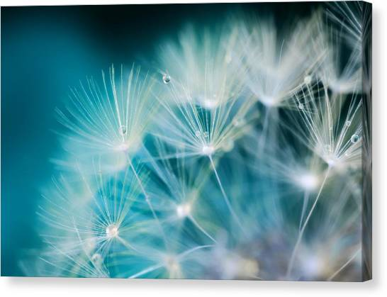 Passionate Canvas Print - Raindrops On Dandelion Sea Blue by Marianna Mills