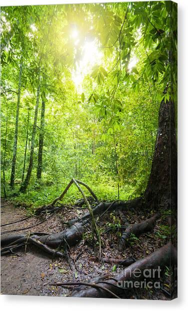 Foggy Forests Canvas Print - Rainforest by Atiketta Sangasaeng
