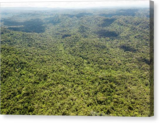 Ecuadorian Canvas Print - Rainforest by Dr Morley Read