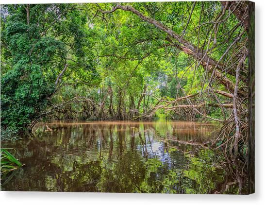 Congo River Canvas Print - Rainforest Trees, Odzala National Park by James Steinberg