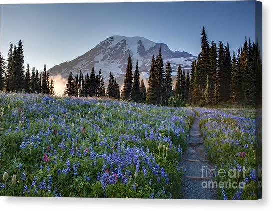 Washington Nationals Canvas Print - Rainier Evening Lupine Fields by Mike Reid