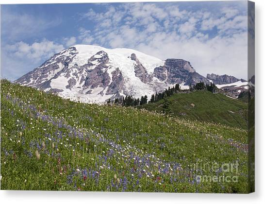 Rainier's Wildflowers Canvas Print