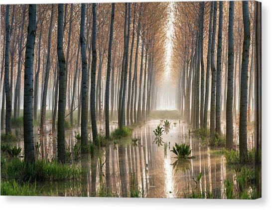 Tree Trunks Canvas Print - Rains Of Spring by Raffaele Spettoli