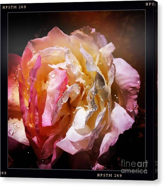 Rainy Rose Canvas Print