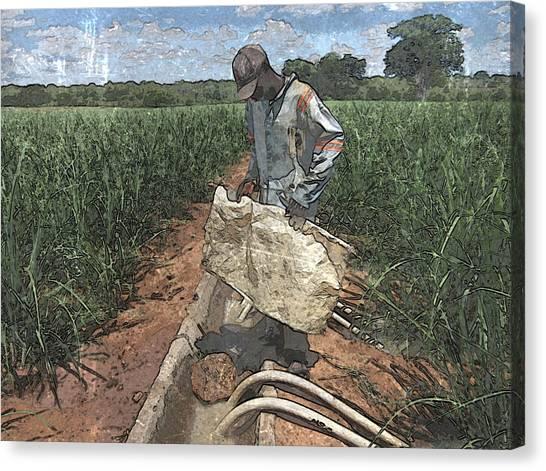 Raising Cane Canvas Print