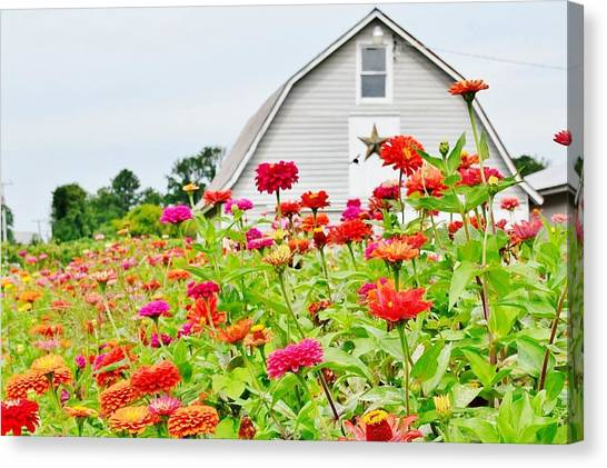 Raising Zinnia Flowers - Delaware Canvas Print