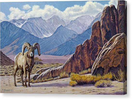 Sierra Canvas Print - Ram-eastern Sierra by Paul Krapf