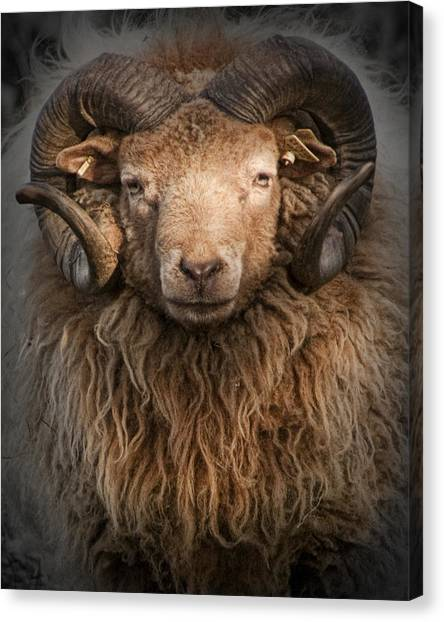 Ram Portrait Canvas Print