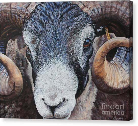 Rammed-in Canvas Print by E Jane Lazenby