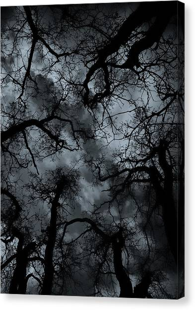 Random Thoughts - Nature Abstract Canvas Print