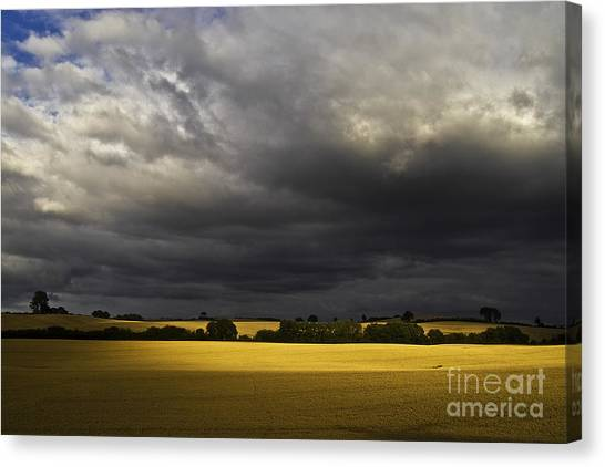 Rapefield Under Dark Sky Canvas Print