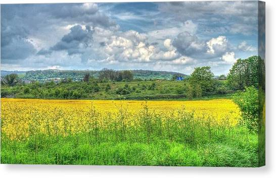 Rapeseed Field Canvas Print by Paul Muscat