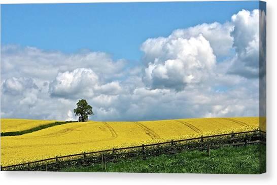 Nottinghamshire Canvas Print - Rapeseed Fields by Flick's Pix