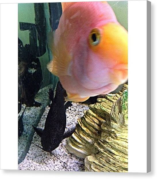Fish Tanks Canvas Print - #raphotoaday Day 6 Looking At This by Baz Twyman