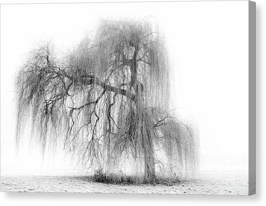 Weeping Willows Canvas Print - Rapunzel by Stefanehlers.com