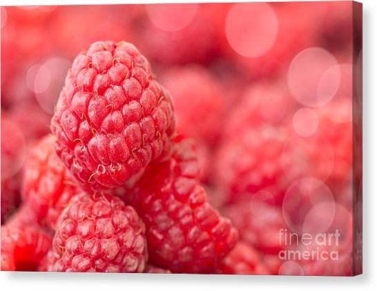 Raspberries Canvas Print - Raspberry by Delphimages Photo Creations