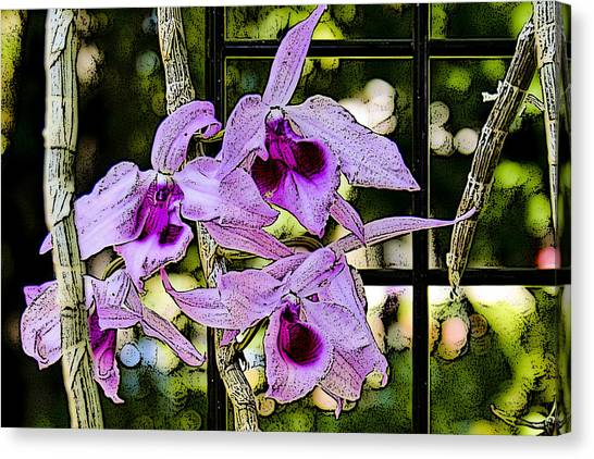 Raspberry Orchids Canvas Print