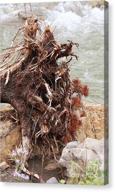 Canvas Print featuring the photograph Ravaged Roots by Ann E Robson