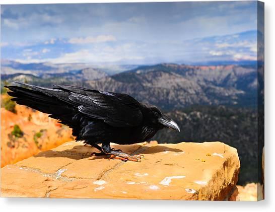 Raven Bryce Canyon Canvas Print