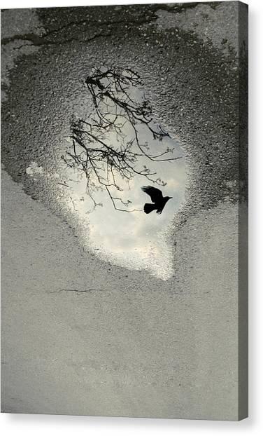 Blackbirds Canvas Print - Raven Reflection by Cambion Art