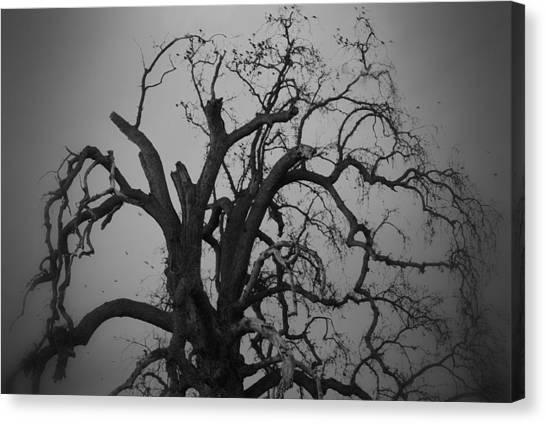Raven Tree Canvas Print