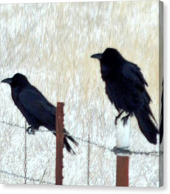 Foul Canvas Print - Ravens On A Fence by Kelli Stowe