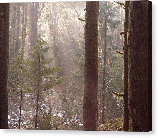 Rays Of Light In Forest Canvas Print