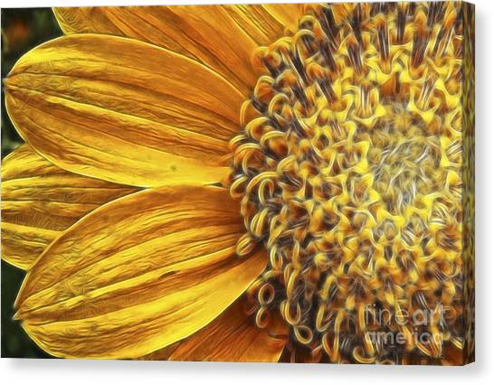 Rays Of Sunshine Canvas Print