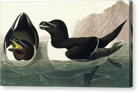 Razorbills Canvas Print - Razorbill by Natural History Museum, London/science Photo Library