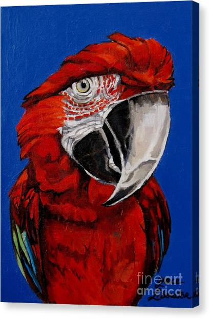 Razzy Red - Bird- Macaw Canvas Print