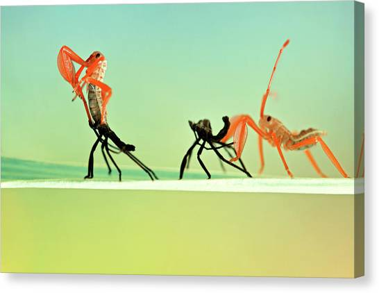 Ants Canvas Print - Re-born by Donald Jusa