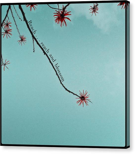 Reach And Blossom Canvas Print
