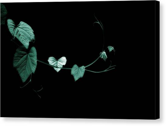 Reach Out And Touch Me Canvas Print