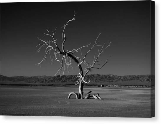 Canvas Print featuring the photograph Reaching by Mike Trueblood