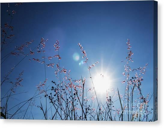 Reaching To The Sun Canvas Print
