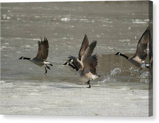 Ready For Take Off Canvas Print by Frederic Vigne