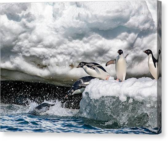 Penguins Canvas Print - Ready, Jump by Siyu And Wei